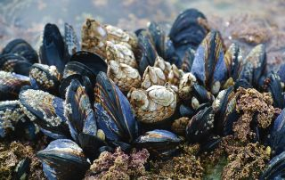 irrigation by design mussels